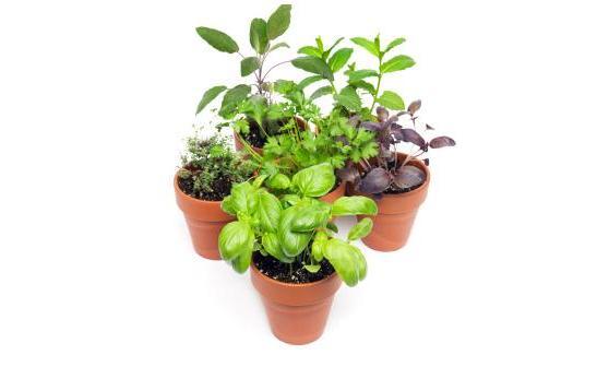 comment et quand planter les herbes aromatiques. Black Bedroom Furniture Sets. Home Design Ideas