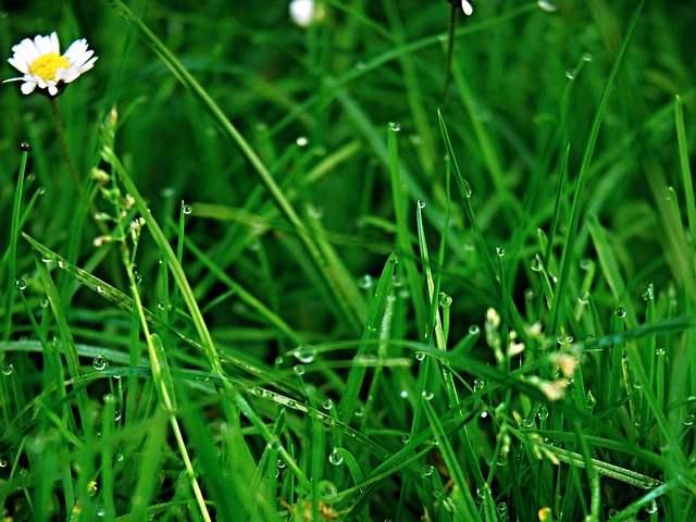 tous nos conseils pour avoir une belle pelouse. Black Bedroom Furniture Sets. Home Design Ideas