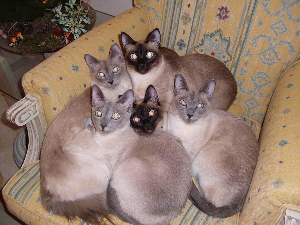 photos de chats rigolos ou insolites 2. Black Bedroom Furniture Sets. Home Design Ideas