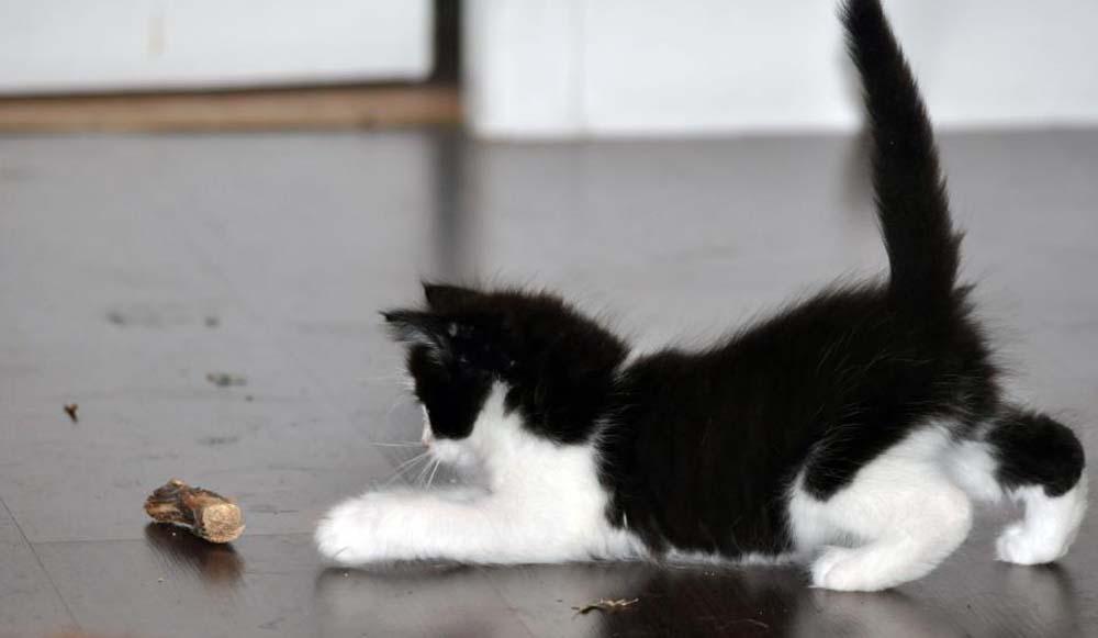 concours chat photos des plus beaux chats s lectionn s. Black Bedroom Furniture Sets. Home Design Ideas