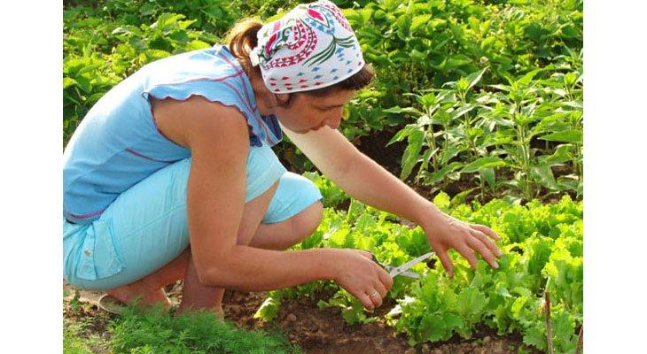 Comment fabriquer du lait de chaux pour prendre soin du jardin - Quelle chaux pour le jardin ...