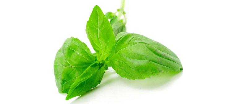 Comment et quand planter le basilic - Ou planter le basilic ...