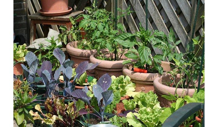 Que planter dans son potager en mars et avril - Que planter en mars au potager ...