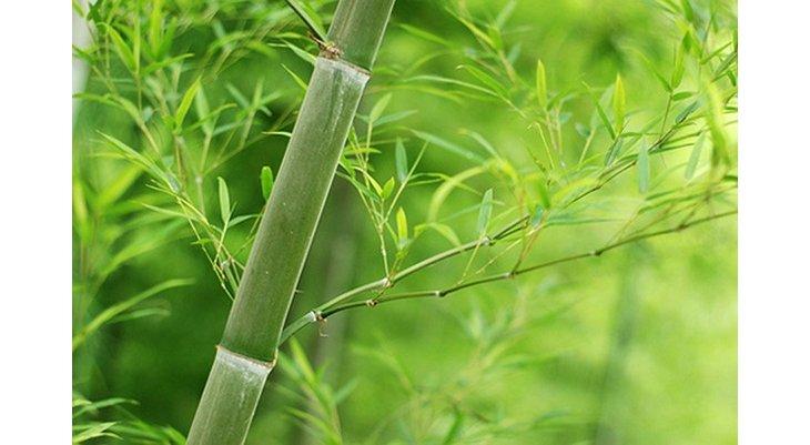Conseils pour adopter le bambou dans votre jardin for Conseil pour le jardin
