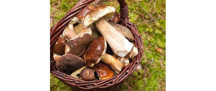 Choux et champignons pour un régime minceur ️
