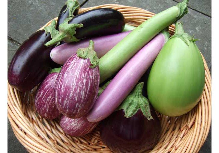 comment et quand planter des aubergines ? ❤️