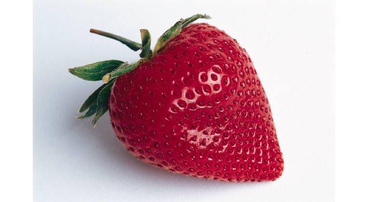 Quand et comment planter des fraises ? ️