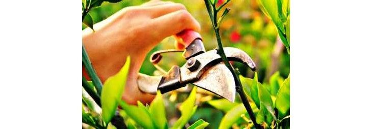 Comment tailler un arbre fruitier - Tailler un arbre fruitier ...