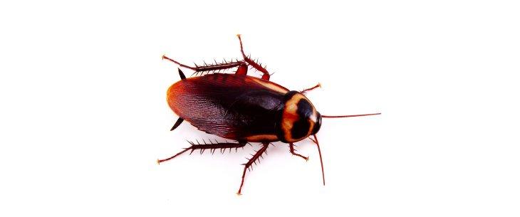 insecticides naturels astuces pour liminer les insectes. Black Bedroom Furniture Sets. Home Design Ideas