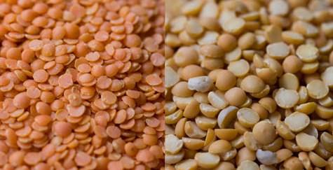 Comment et quand cultiver la lentille ?