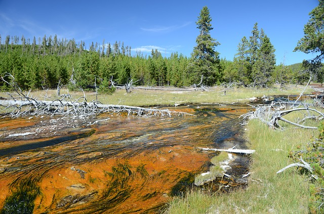 Ruisseau thermique Yellowstone
